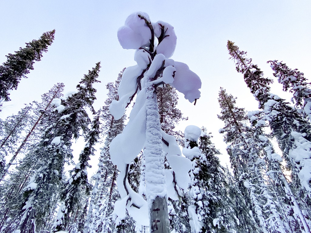 zima w fińskiej Laponii