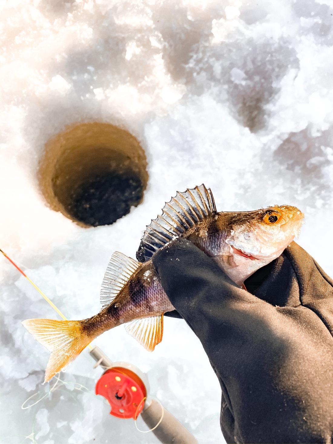 Ryba prosto z przerębla